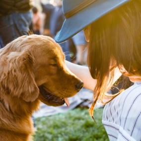 Pet Safety Products eCom Business